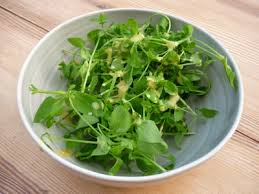 chickweed salad