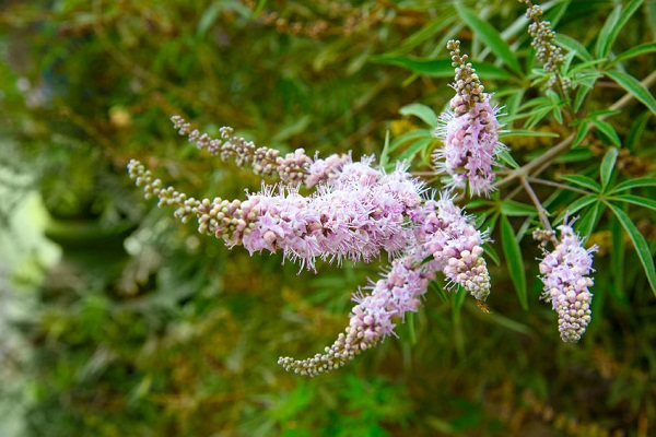 Vitex: For every cycle of a woman's life